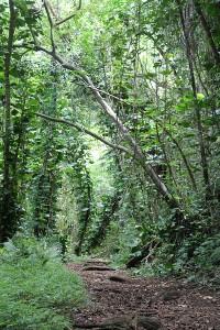 Manoa Hiking Trail 2w